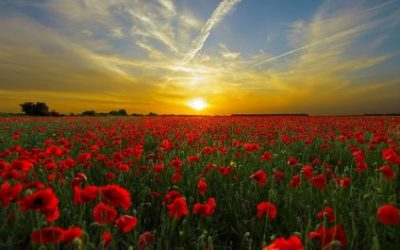 Remembrance Service @10am Sunday 10th of November 2019
